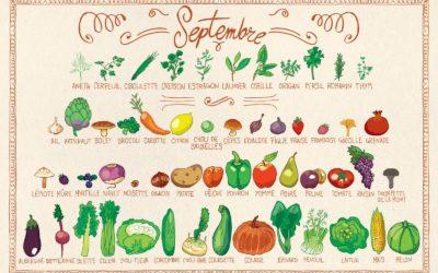 Fruits et légumes du mois de septembre 🍇